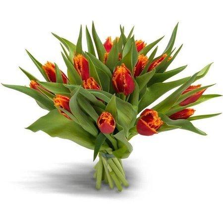 Bukiet 12 tulipanów strzępiastych