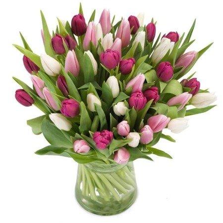 Bukiet 50 Tulipanów pastelowych