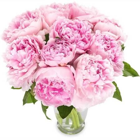 Bukiet - Różowych Piwonii